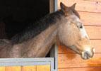 box di cavallo verniciato e protetto con impregnanti e vernici all'acqua Plack